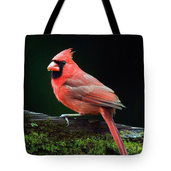 Male Northern Cardinal Cardinalis Tote Bag by Panoramic Images