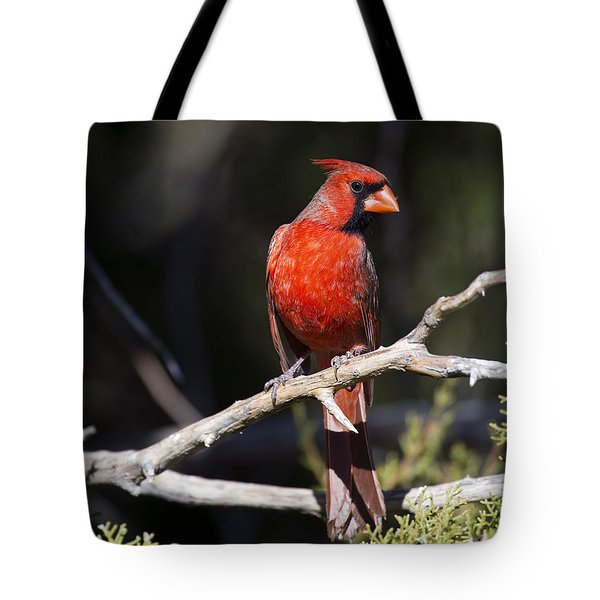 Male Northern Cardinal Tote Bag by Gary Langley