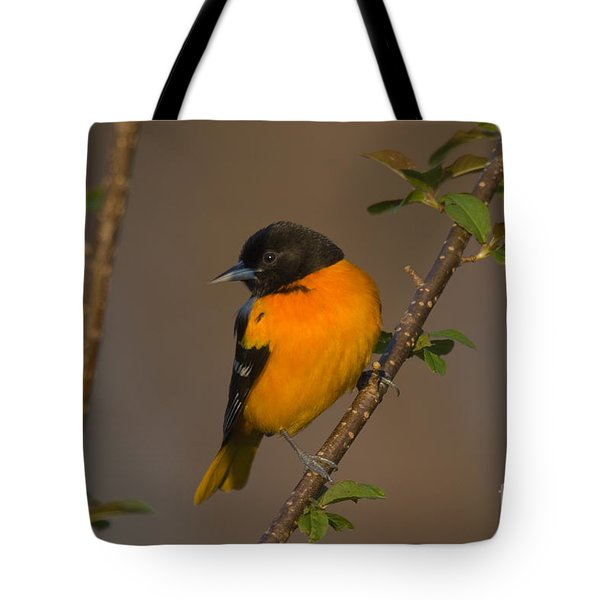 Male Northern Oriole Tote Bag by Thomas and Pat Leeson