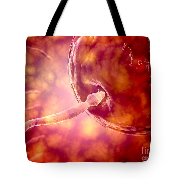 Male Reproductive Sperm Entering Tote Bag by Stocktrek Images