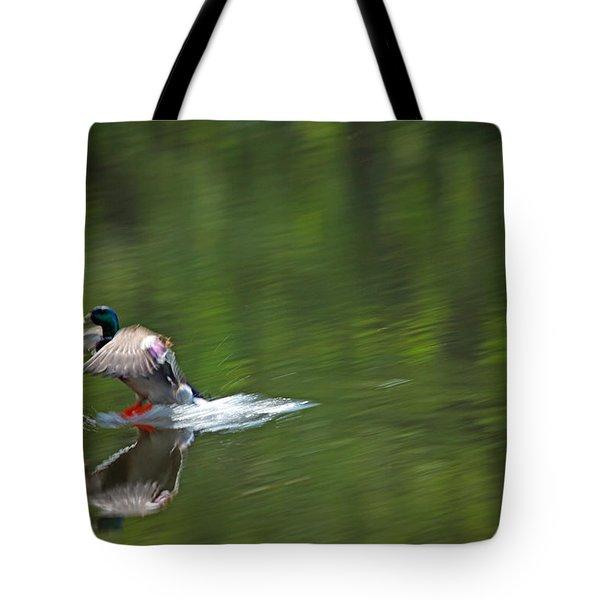 Mallard Splash Down Tote Bag by Karol Livote