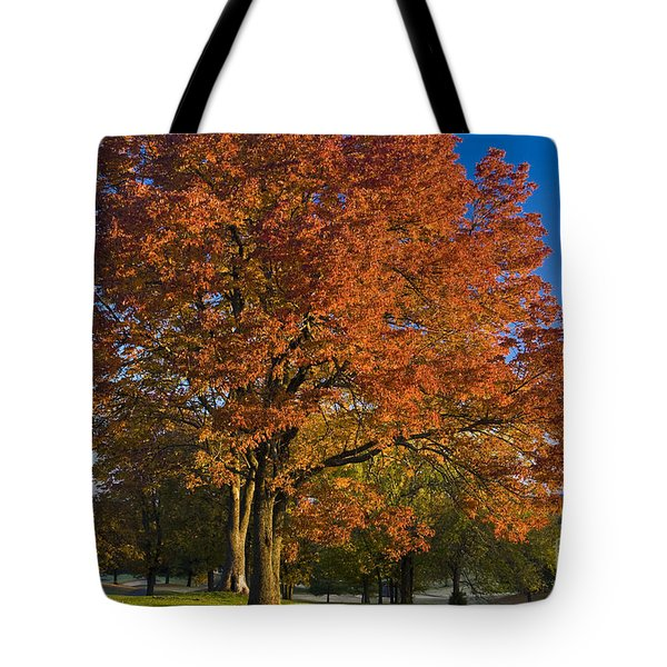 Maple Trees Tote Bag by Brian Jannsen