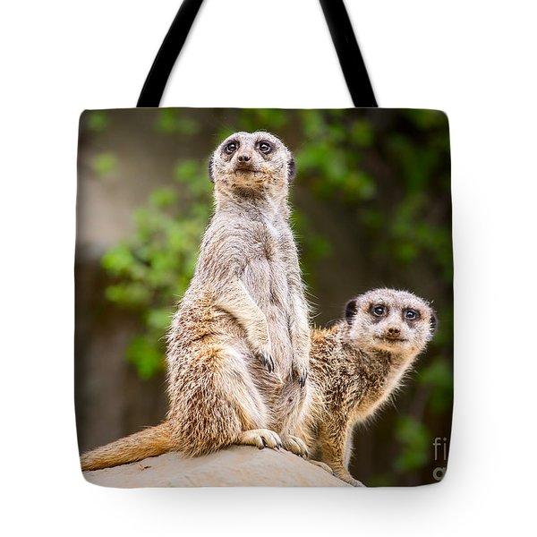 Meerkat Pair Tote Bag by Jamie Pham