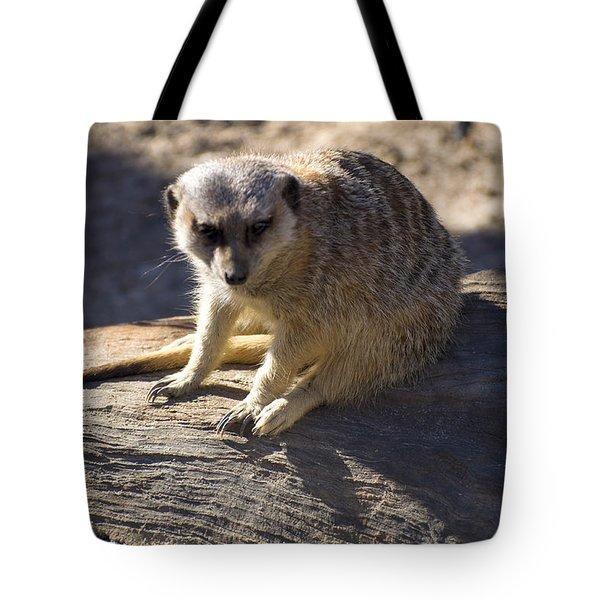 Meerkat Resting On A Rock Tote Bag by Chris Flees