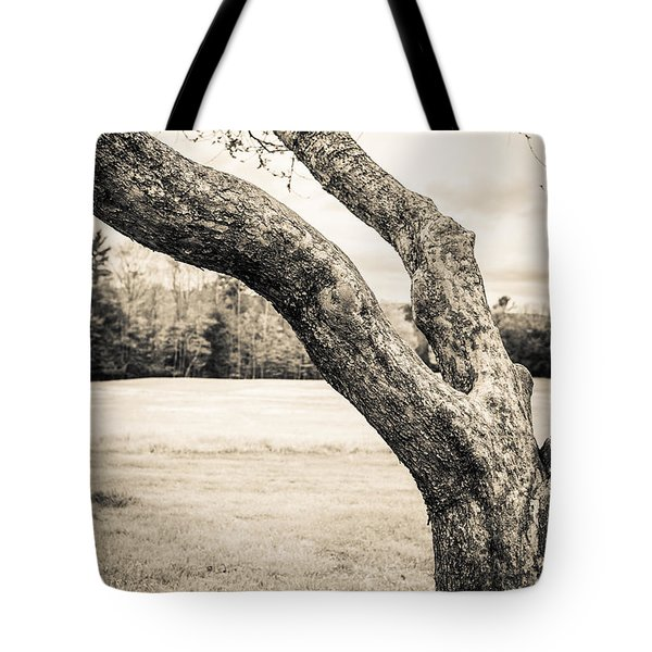 Meet Me Under The Old Apple Tree Tote Bag by Edward Fielding