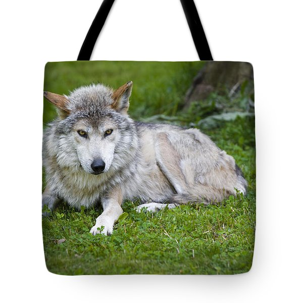 Mexican Gray Wolf Tote Bag by Sebastian Musial