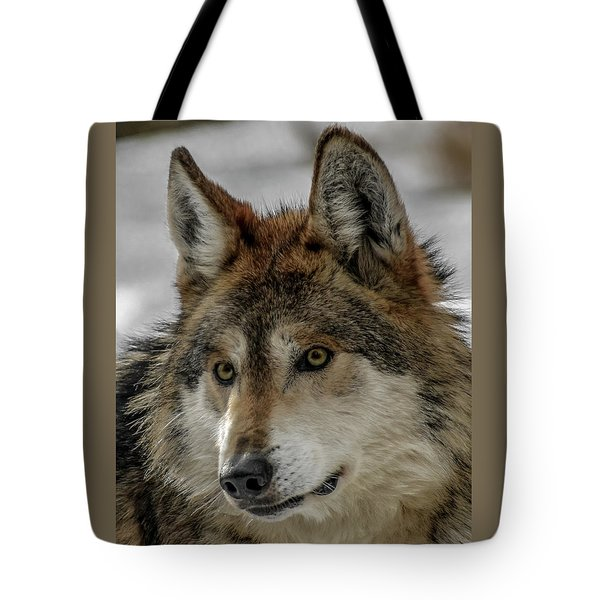Mexican Grey Wolf Upclose Tote Bag by Ernie Echols