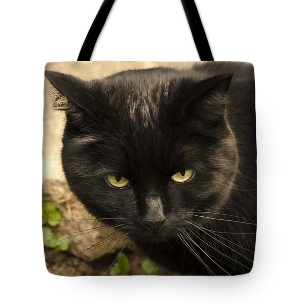 Molly Tote Bag by Linsey Williams