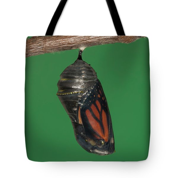 Monarch Butterfly Chrysalis IV Tote Bag by Clarence Holmes