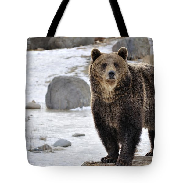 Montana Grizzly  Tote Bag by Fran Riley