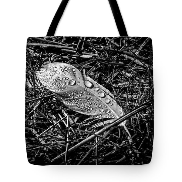 Morning dew Tote Bag by Bob Orsillo