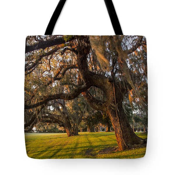 Mossy Trees at Sunset Tote Bag by Debra and Dave Vanderlaan