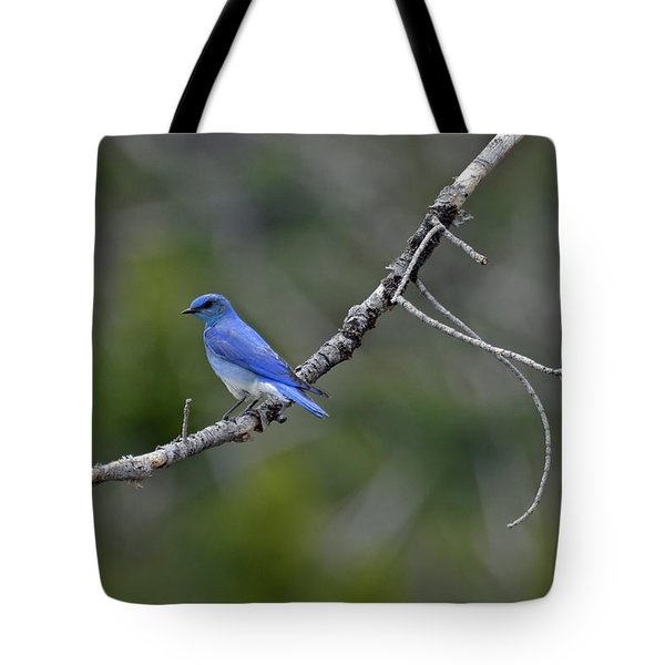 Mountain Bluebird In Yellowstone National Park Tote Bag by Bruce Gourley