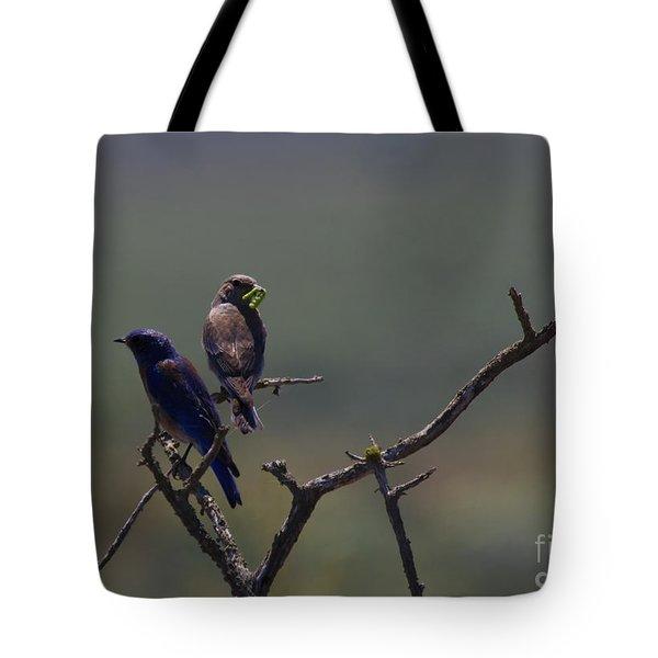 Mountain Bluebird Pair Tote Bag by Mike  Dawson
