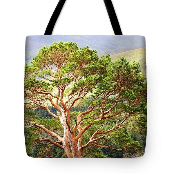 Mountain Pine Tree In Wicklow. Ireland Tote Bag by Jenny Rainbow