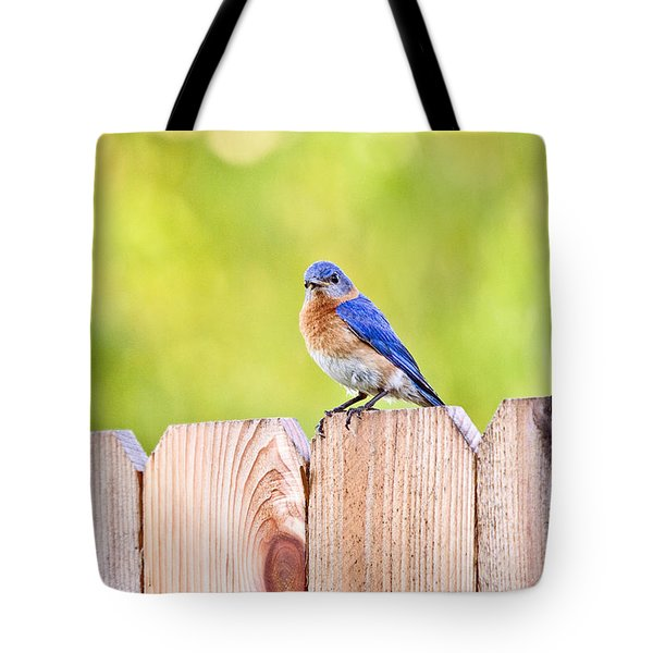 Mr. Bluebird Tote Bag by Scott Pellegrin
