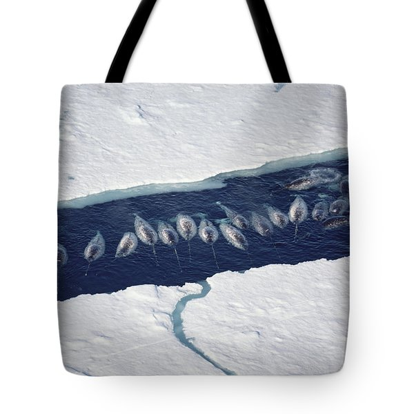 Narwhal Group In Ice Break Tote Bag by Flip Nicklin
