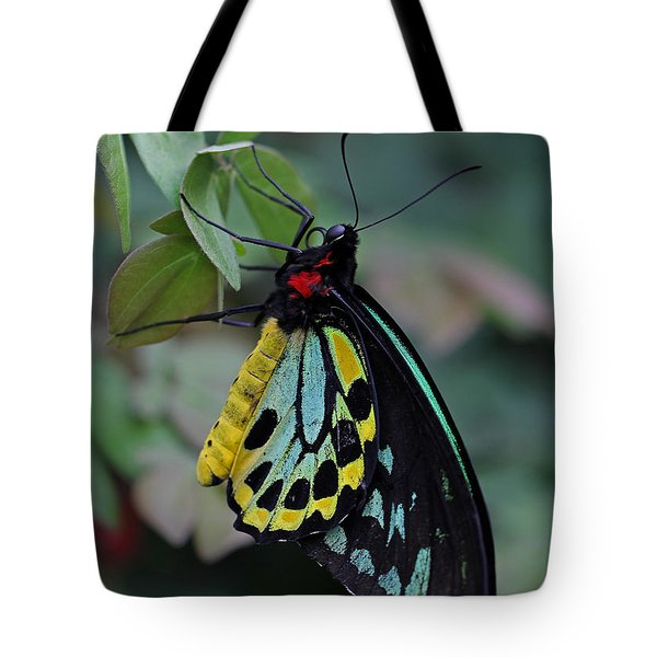 Natural Awakenings Tote Bag by Juergen Roth