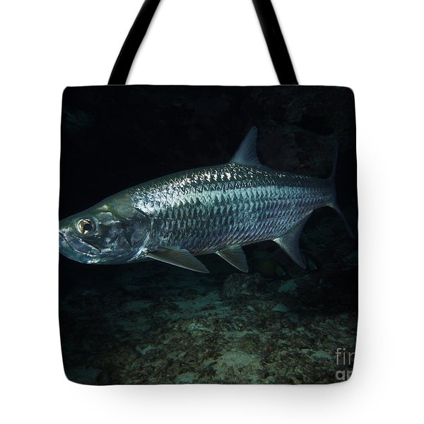 Night Tarpon Tote Bag by Carey Chen