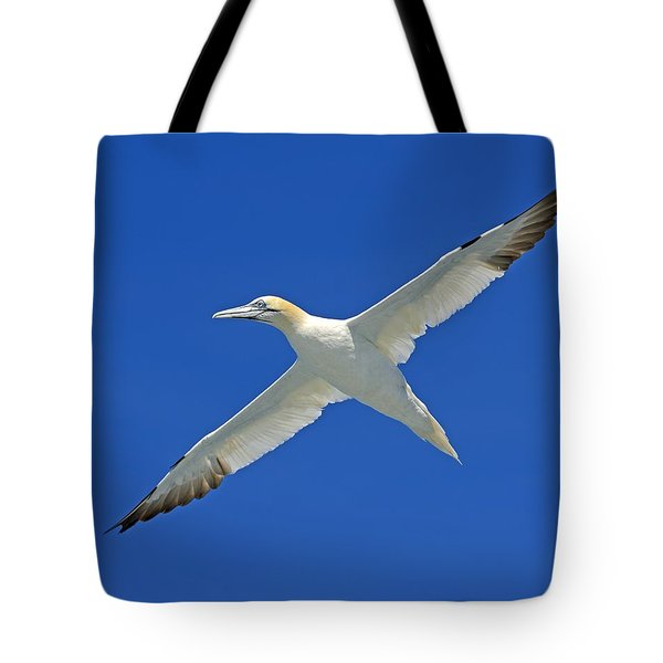 Northern Gannet Tote Bag by Tony Beck