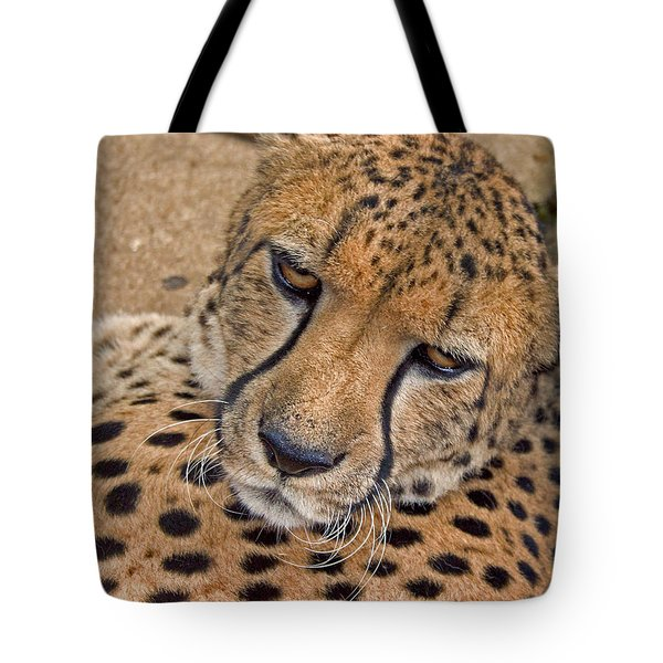 Not So Fast Tote Bag by David Rucker