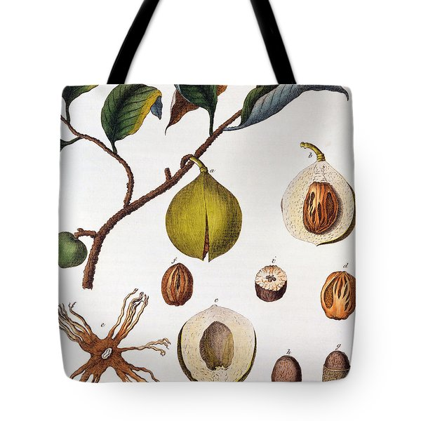 Nutmeg Myrsitica Fragrans Tote Bag by Anonymous