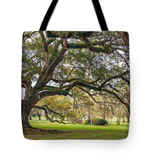 Oak Alley Reverie Tote Bag by Steve Harrington