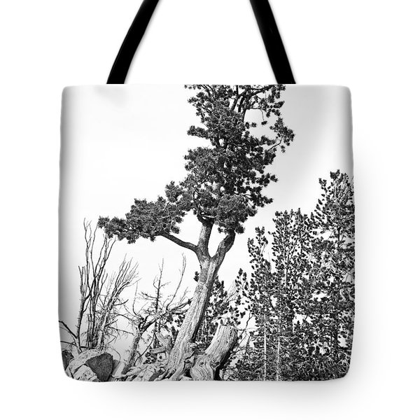 Old Gnarly Tree Tote Bag by Edward Fielding
