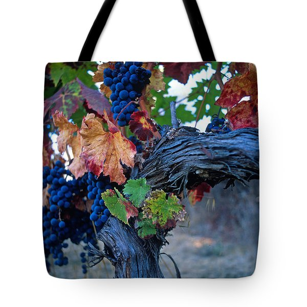 Old Vine Tote Bag by Kathy Yates