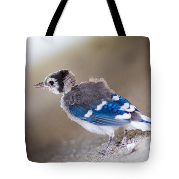one day...I will fly Tote Bag by Shane Holsclaw