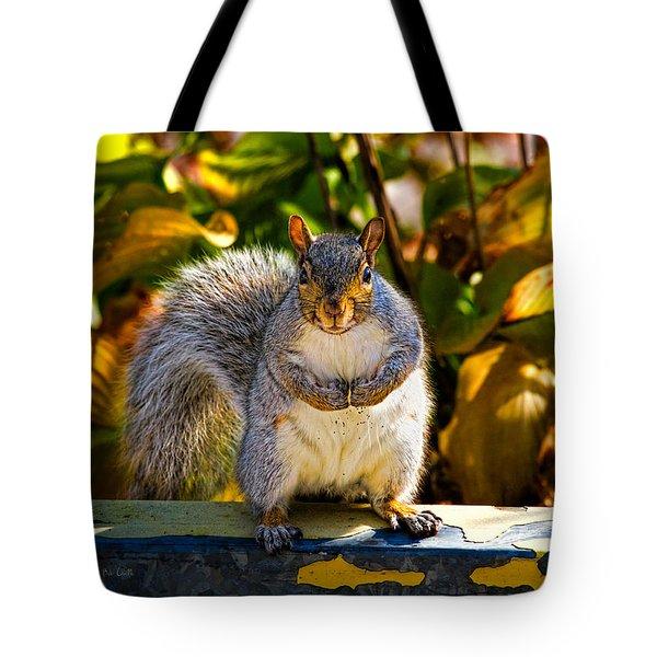 One Gray Squirrel Tote Bag by Bob Orsillo