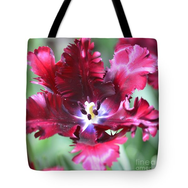 Opened Tulip Tote Bag by Kathleen Struckle