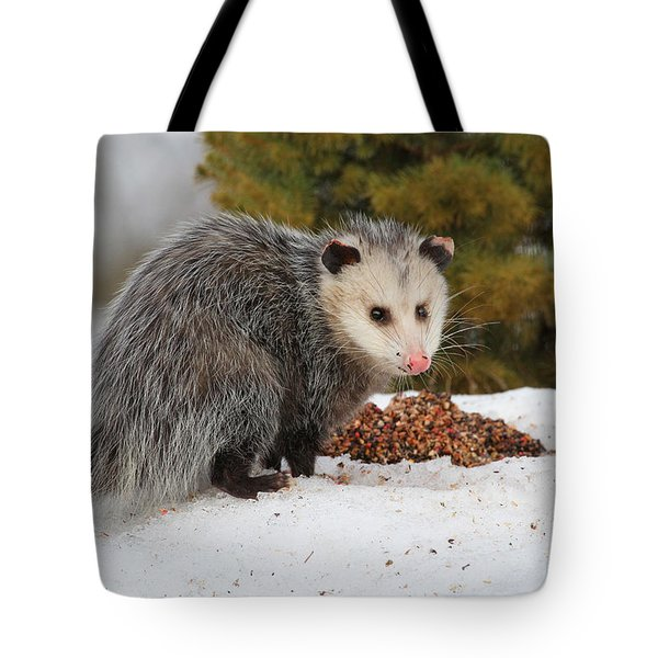 Opossum Tote Bag by Karol  Livote