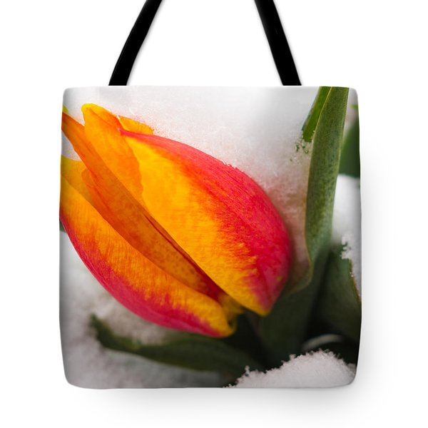 Orange And Red Tulip In The Snow Tote Bag by Matthias Hauser