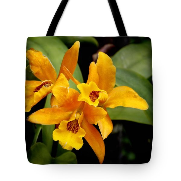 Orange Spotted Lip Cattleya orchid Tote Bag by Rudy Umans