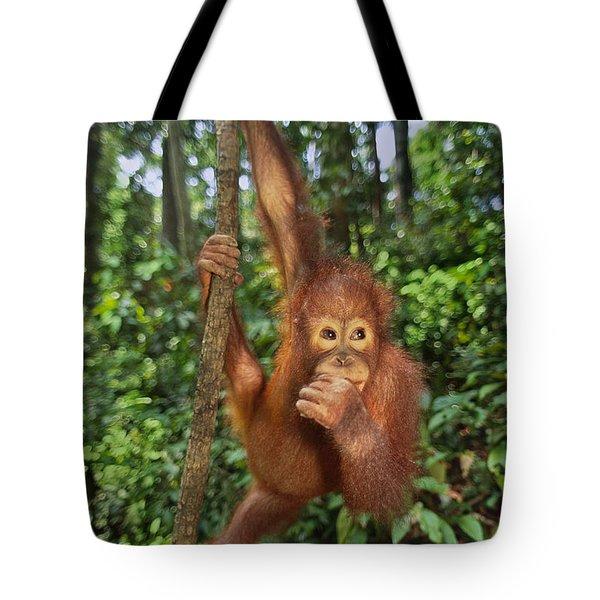 Orangutan  Tote Bag by Frans Lanting MINT Images