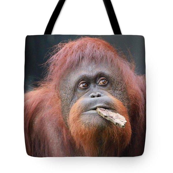 Orangutan Portrait Tote Bag by Dan Sproul