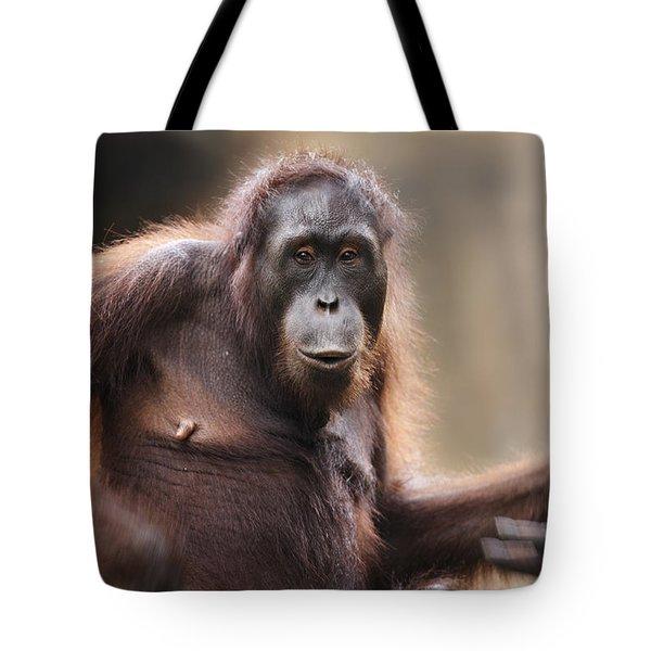 Orangutan Tote Bag by Richard Garvey-Williams