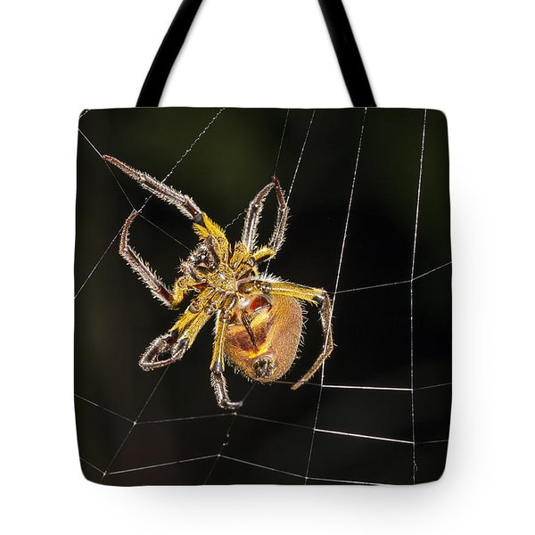 Orb-weaver Spider In Web Panguana Tote Bag by Konrad Wothe
