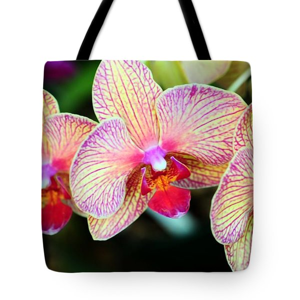 Orchid Trio Tote Bag by Kathleen Struckle