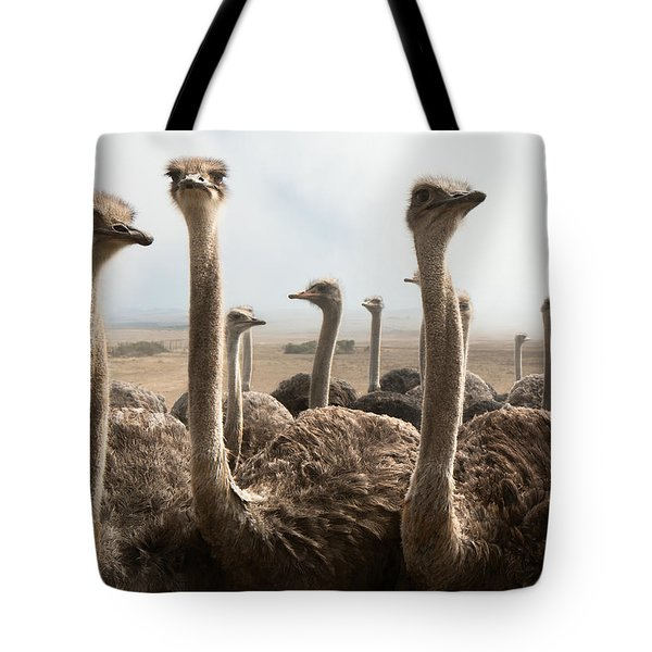 Ostrich Heads Tote Bag by Johan Swanepoel