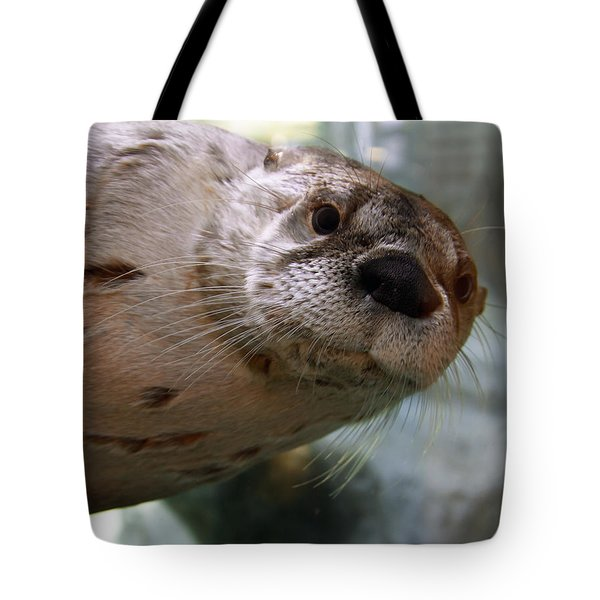 Otter Be Lookin' At You Kid Tote Bag by John Haldane
