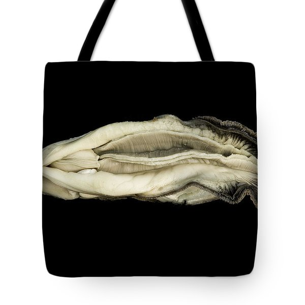 Oyster Suspended In Darkness Tote Bag by Andy Frasheski