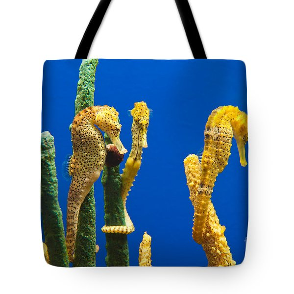 Pacific Seahorses Hippocampus Ingens Are Among The Giants Of Their World Tote Bag by Jamie Pham