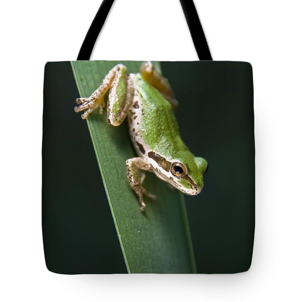 Pacific Tree Frog Pseudacris Regilla Tote Bag by Jack Goldfarb