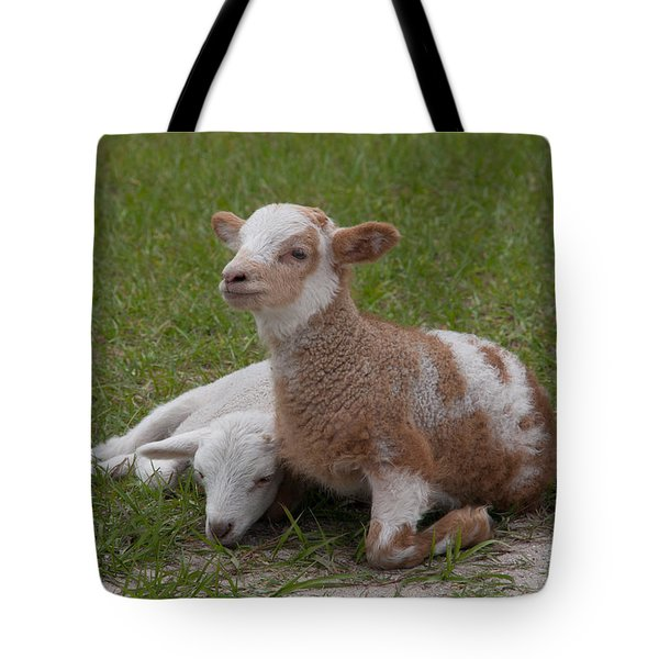 Pair Of Lambs Tote Bag by Richard Baker
