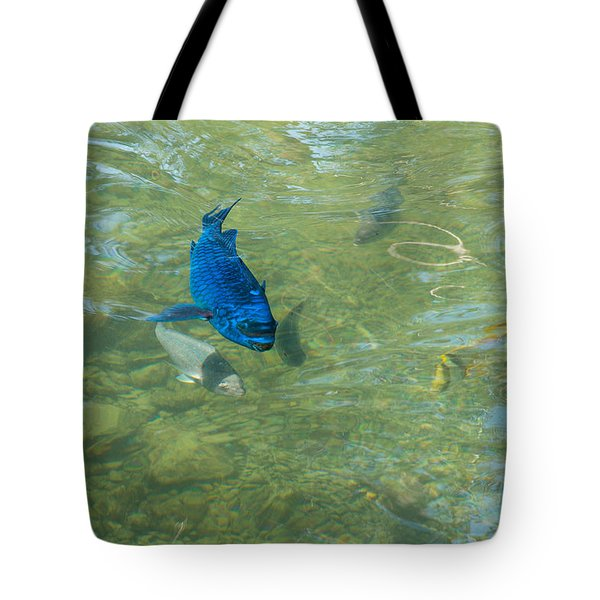 Parrotfish on a Swim Tote Bag by John Bailey