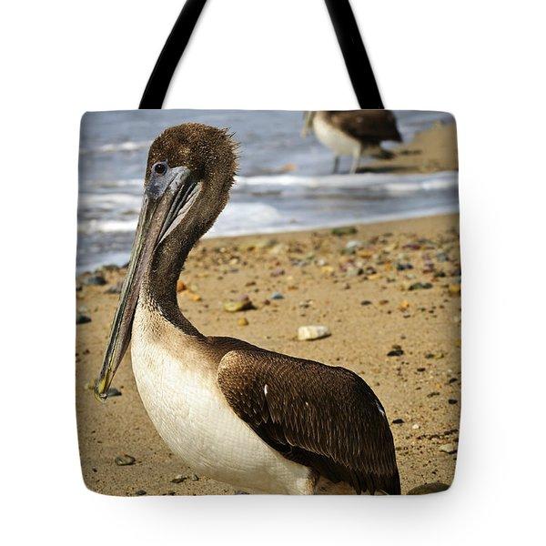 Pelicans On Beach In Mexico Tote Bag by Elena Elisseeva