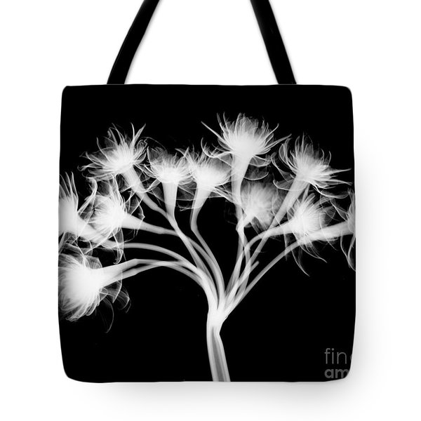 Pentaster Blossom X-ray Tote Bag by Bert Myers