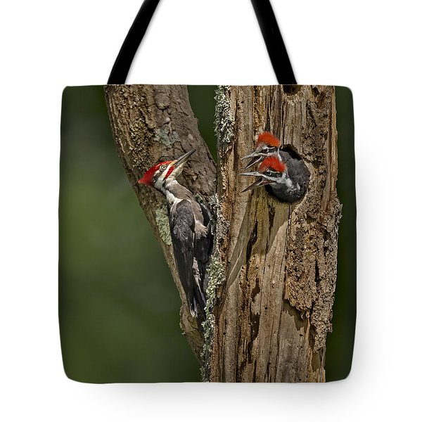 Pilated Woodpecker Family Tote Bag by Susan Candelario